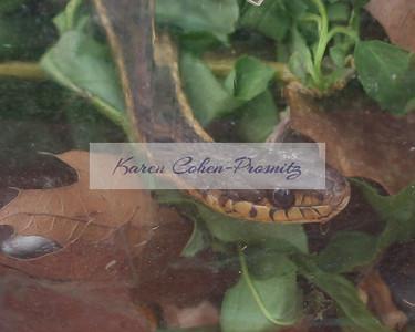 IMG_2475 8x10 snake closeup