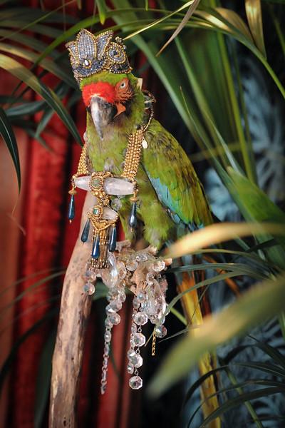 OLL_1695 parrot