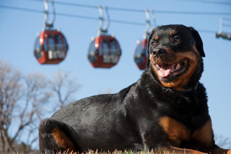 Good dog Kota