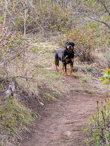 Rottweiler Trail