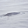 Blue Whale at Sea 6:25 007
