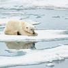Polar Bear 5 Resting 6:23 010