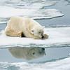 Polar Bear 5 Resting 6:23 017