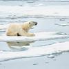 Polar Bear 5 Resting 6:23 007