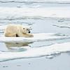 Polar Bear 5 Resting 6:23 005