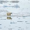 Polar Bear 5 Resting 6:23 002