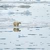 Polar Bear 5 Resting 6:23 001