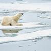 Polar Bear 5 Resting 6:23 006