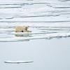 Polar Bear 5 Resting 6:23 003