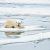 Polar Bear 5 Resting 6:23 004