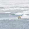 Polar Bear and Misc 6:27 008