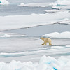 Polar Bear and Misc 6:27 014