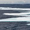 Polar Bear and Misc 6:27 001