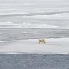Polar Bear and Misc 6:27 006