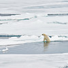 Polar Bear and Misc 6:27 012