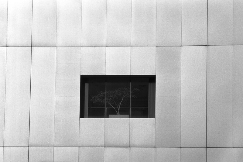 <b>Office Plants</b> - On the side of a monstrous, featureless skyscraper, there is one column of windows.  The tree looked kind of like it was watching people on the street.