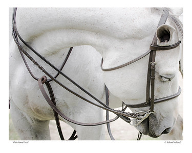 White Horse Detail