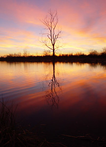 Tree and Reflections 2 - Joliet, IL