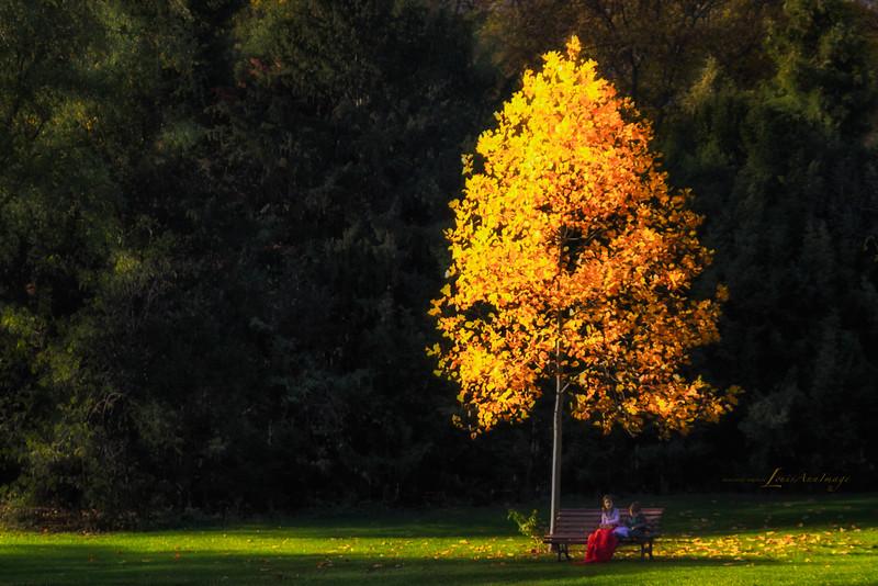Golden Shade - Humboldthain Park, Berlin, Germany
