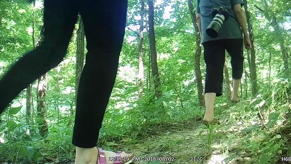Peeps in the woods