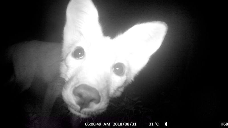 Fox getting a closer look