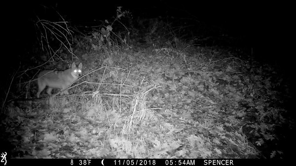 Trail camera pick up