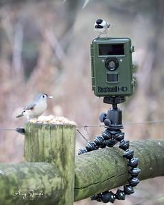 Bushnell Nature View Trail Camera