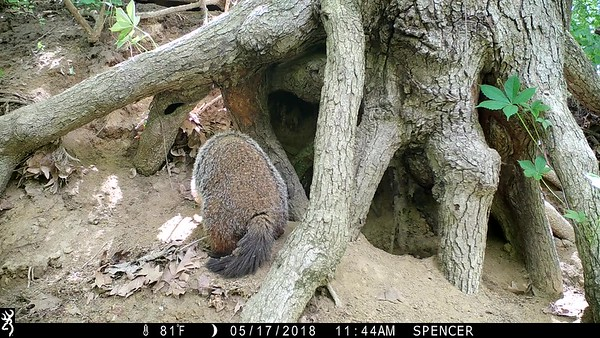 May 17, Move in day for the Groundhog family.