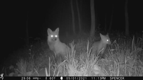 Trail Camera Pick up