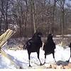 Crows eating suet scraps