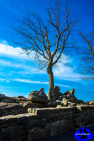 The Art of the Tree, Shenandoah National Park, Branches to the Skies