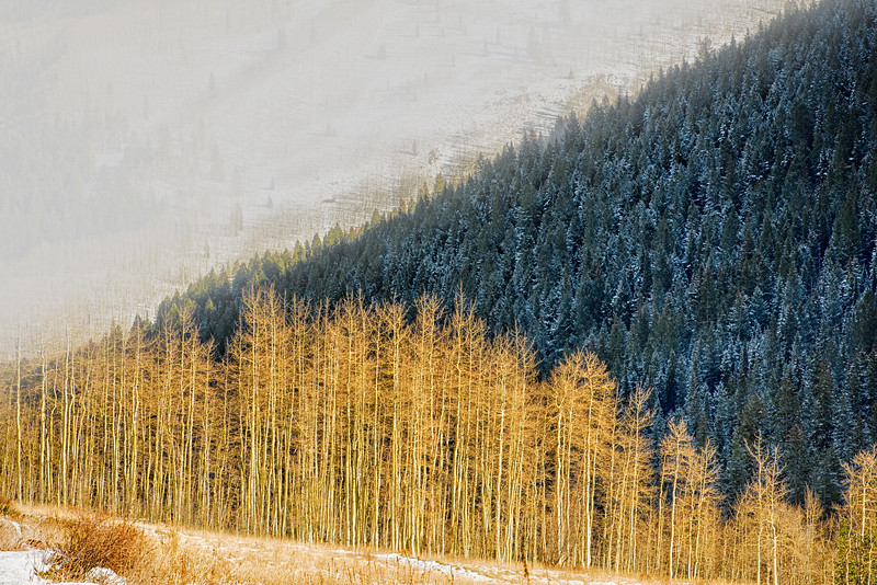 Aspens, Pines and the Cold Mountain.