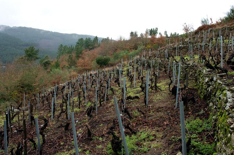 Vineyards in Ribeira Sacra.