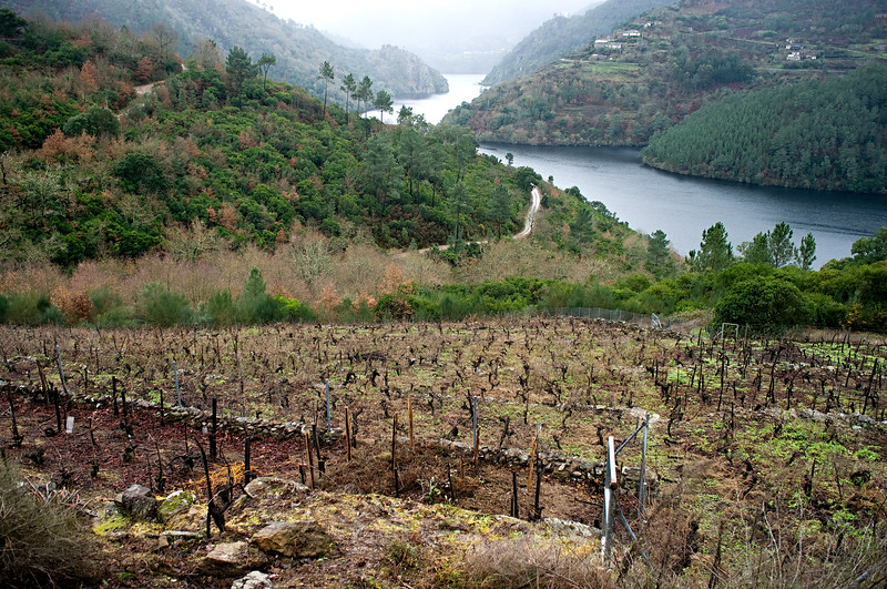 Vineyards of D. Ventura in Ribeira Sacra.