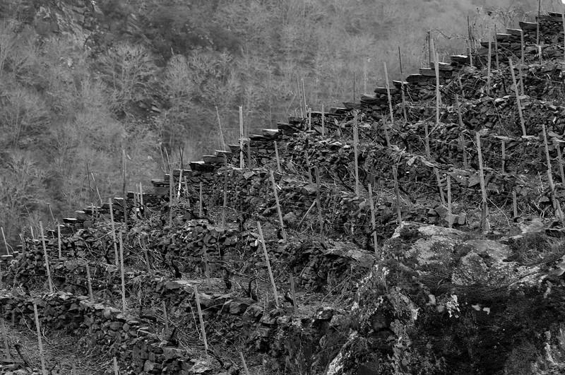 The vineyards of Ribeira Sacra.
