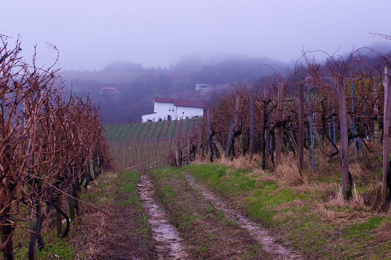 The vineyards of Amestoi in D.O. Getariako Txakolina.