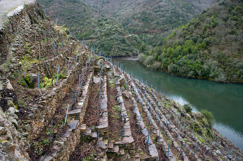 Vineyards of Ribeira Sacra (sacred banks) in Galiciain.
