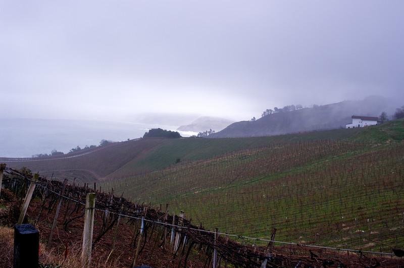 Ameztoi's vineyards run into the Atlantic Ocean.