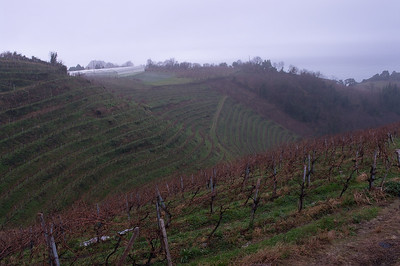 Ameztoi vineyards on a foggy, drizzly, January day.