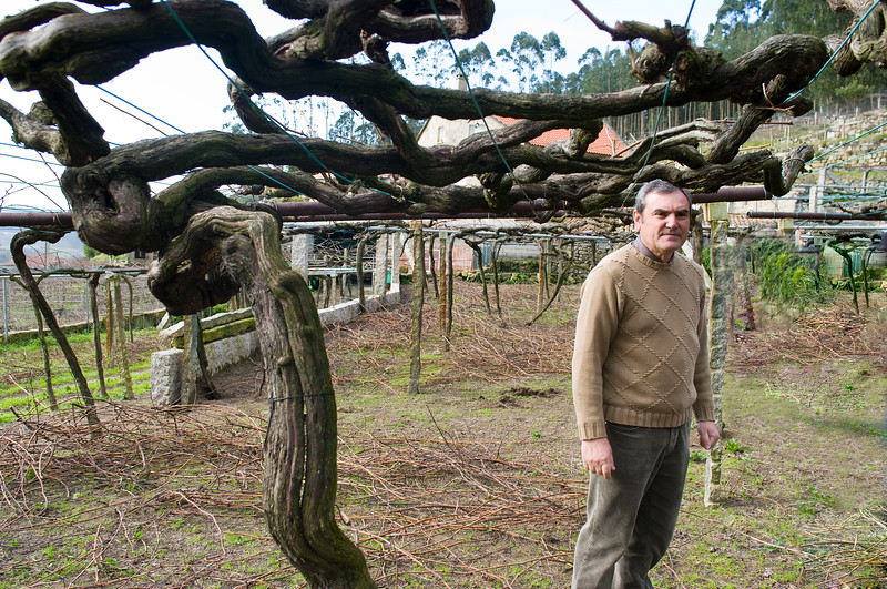 Gerardo Mendez, owner of D.O. Ferreiro, stands under one of his 200 year old vines.
