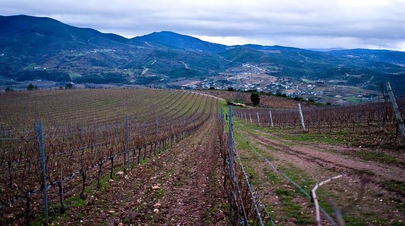 A Coroa Godello vineyards.