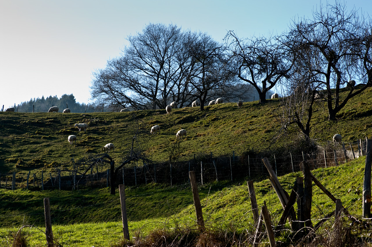 Basque Landscape at Isastegi
