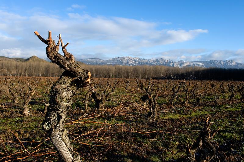 Vineyards in Rioja.