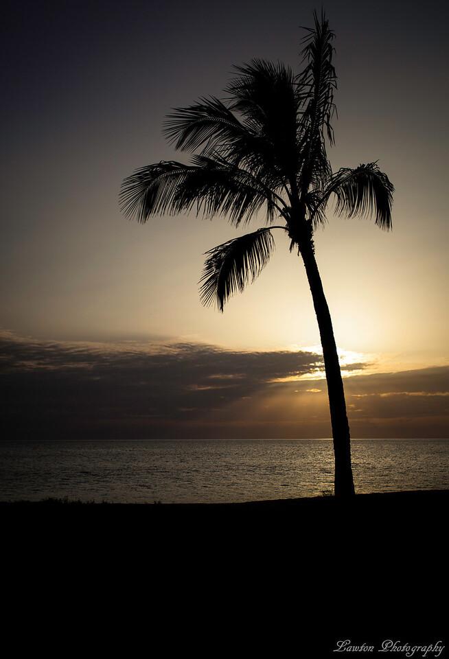 Solo Palm Tree