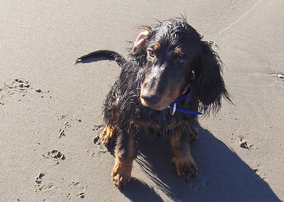 Beach Puppies and Firsts