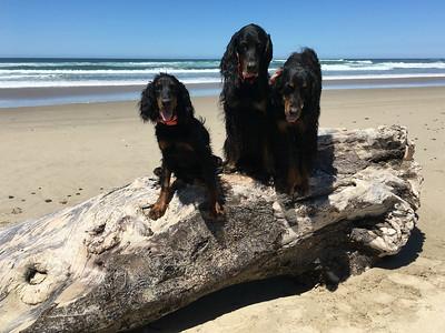 Birthday @ the Beach -- June 2018