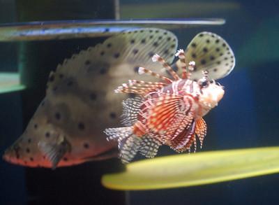 Oregon Coast Aquarium - April 2009