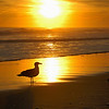 Gull & Sunset, Long Beach, NY