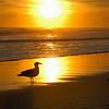Gull & Sunset, Long Beach, NY