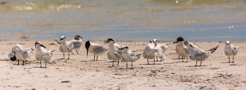 Crowding the beach